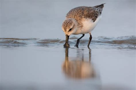 New study quantifies impact of hunting on migratory