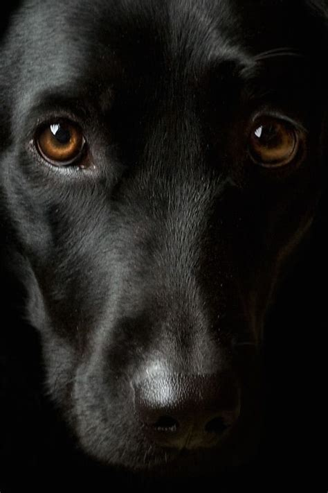 A glimpse into the beautiful soul of a dog